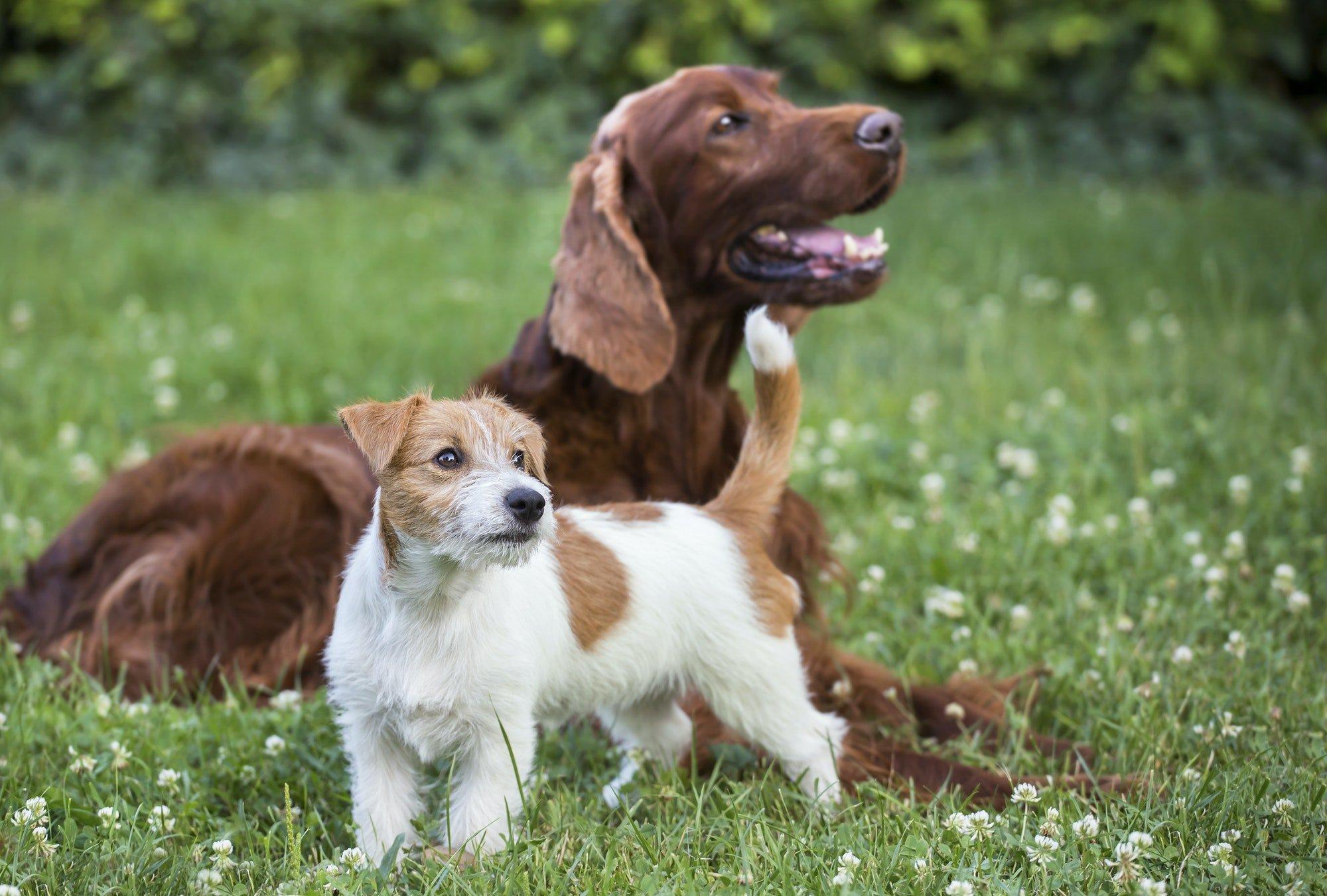 Dog friendship - happy pet friends