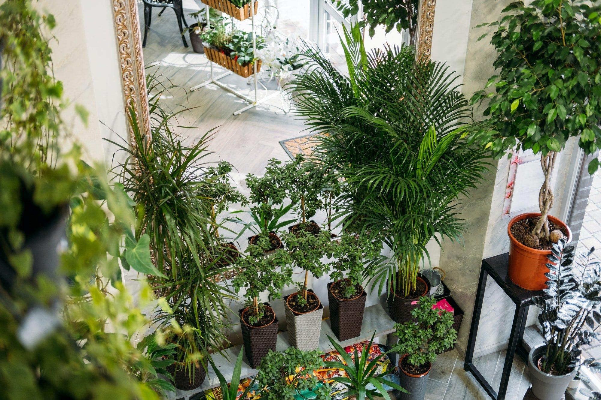 Garden room, Biophilia trend, Living with Nature, biophilic interior design. Many different indoor